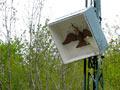 Vogelschießen in Herbram (Bild 8156)