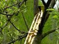 Vogelschießen in Herbram (Bild 8157)