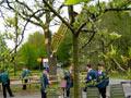 Vogelschießen in Herbram (Bild 8158)