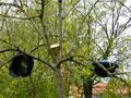 Vogelschießen in Herbram (Bild 8163)