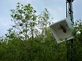 Vogelschießen in Herbram (Bild 8867)